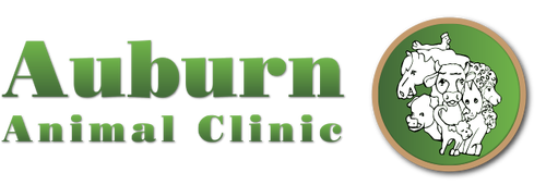 Auburn Animal Clinic